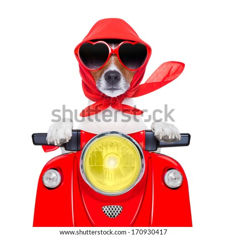 motorcycle dog summer dog driving a motorbike with sunglasses - stock photo
