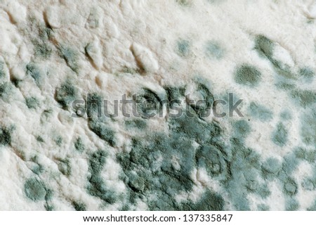 mould - stock photo