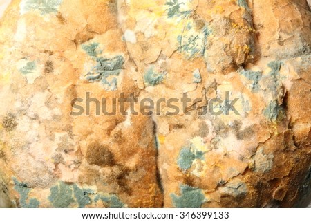Mould growing old bread nobody texture background - stock photo