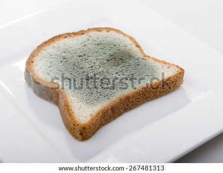 Mould growing rapidly on mouldy bread in green and white spores - stock photo