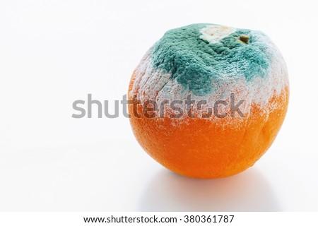 Mouldy orange on white background - stock photo