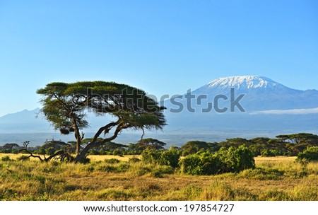 Mount Kilimanjaro in the African savannah in Kenya - stock photo