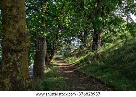 mount wellington park trail with sunlight coming down in between the trees. taken in auckland, new zealand. - stock photo