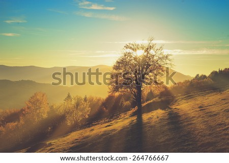 Mountain autumn landscape with colorful forest. Vintage effect - stock photo
