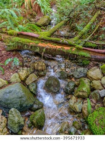 Mountain Creek in Vancouver, Canada. - stock photo