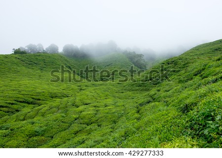 Mountain filled with tea plantations and fog in Cameron Highlands, Malaysia. - stock photo