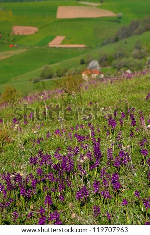 Mountain flowers - stock photo