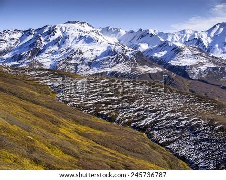 Mountain Foliage - Denali National Park - stock photo