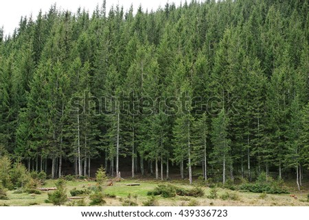 Mountain forest in spring - stock photo