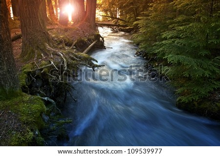 Mountain Forest Scenery with Sunlight Coming In Between Trees. Mountain Stream. Nature Photo Collection. Glacier National Park, Montana, U.S.A. - stock photo