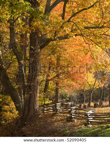 Mountain forest with split rail fence, fall colors - stock photo