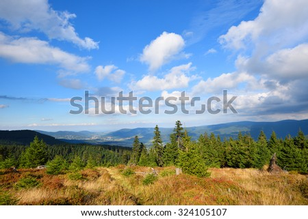 Mountain green spruce forest under white clouds sky - stock photo