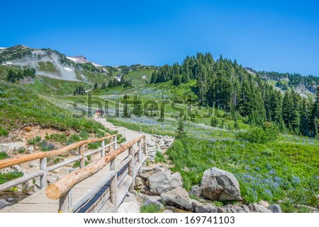 Mountain Hiking Trail. Wildflowers. Deep blue sky. Mount Rainier, Washington, tourism. Copy space. - stock photo