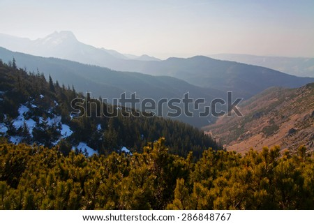 Mountain horizon landscape with tree forest in Zakopane - stock photo