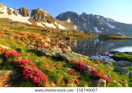 Mountain lake and red rhododendron flowers at sunset - stock photo