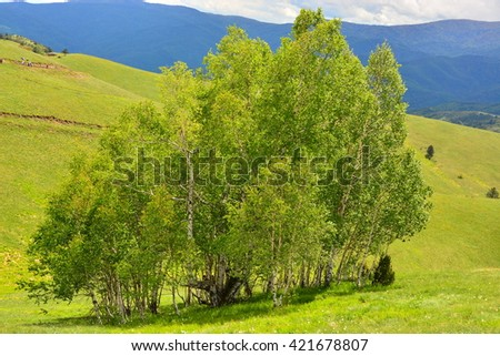 Mountain landscape birch meadows  - stock photo