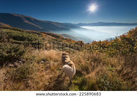 Mountain landscape - Faithful dog watching into the sun at dawn - stock photo
