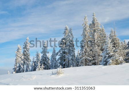 Mountain landscape on a sunny day. Fir forest under snow. Winter view - stock photo