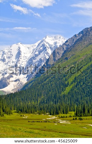 Mountain landscape with a snowy peak and herd of cows - stock photo