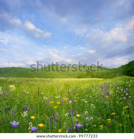 Mountain landscape with flowers - stock photo