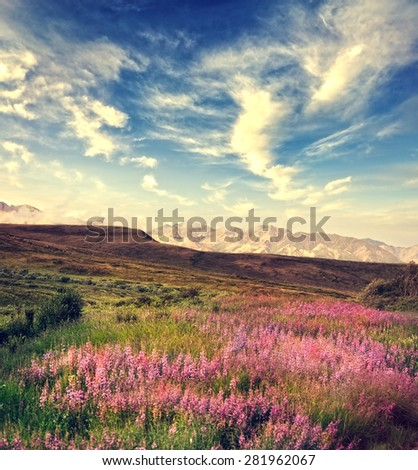 Mountain Landscape With Pink Flowers Blossom - stock photo