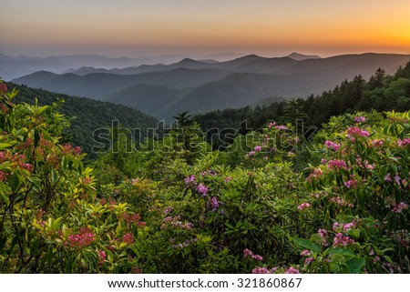 Mountain Laurel bask in the soft evening light with the Blue Ridge Mountains layered out in the background. - stock photo
