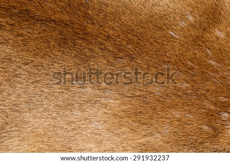 mountain lion fur background texture image - stock photo