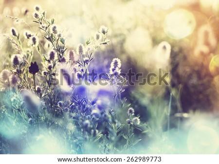 Mountain meadow - stock photo