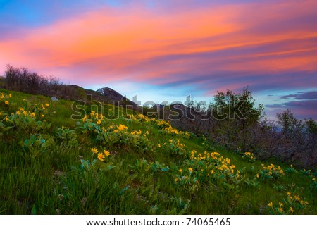 Mountain Meadow at Sunset - stock photo