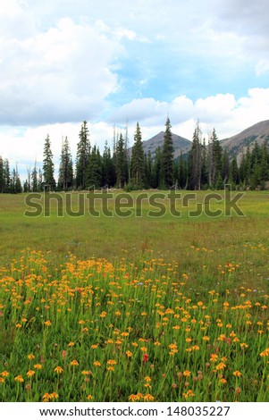 Mountain meadow filled with wildflowers, Utah, USA. - stock photo