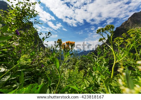 Mountain meadow in sunny day - stock photo