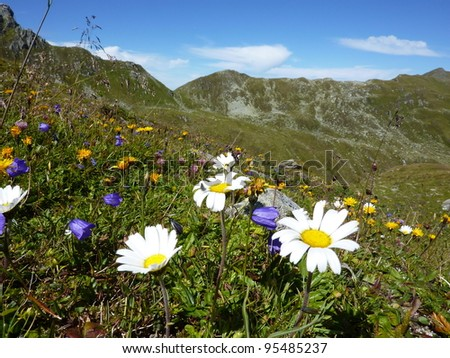 Mountain meadow with flowers - stock photo