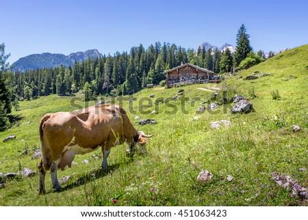 Mountain pasture in the alps, Salzburg, Austria - stock photo