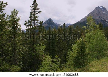 Mountain peaks in Waterton National Park, Alberta Canada; trees in foreground; cloudy day; early summer - stock photo