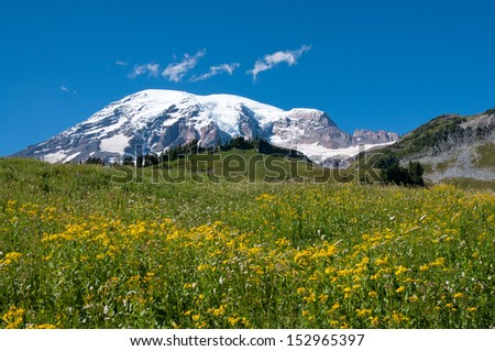 Mountain Rainier, Paradise Valley, meadows in blossom - stock photo