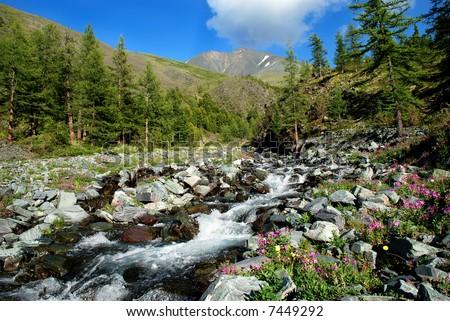 Mountain river, Altai, Russia - stock photo