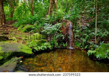 Mountain river or stream at Kalalau trail, Kauai, Hawaii - stock photo