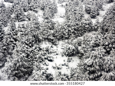 Mountain slope pine forest winter snowed christmas trees - stock photo