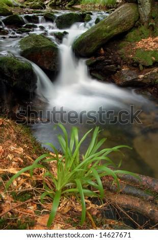 Mountain spruit in bohemia - stock photo