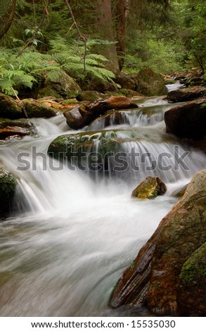 mountain spruit in bohemia - stock photo