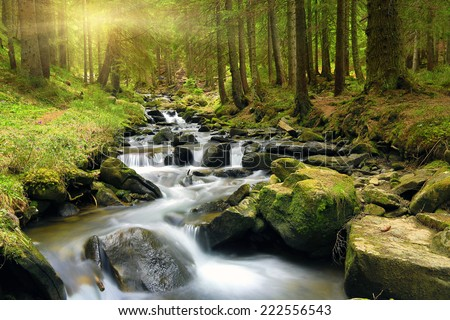Mountain stream in green forest at spring time  - stock photo