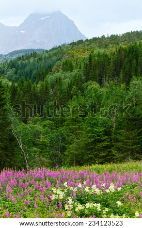 Mountain summer cloudy view with flowers in front (Norway) - stock photo