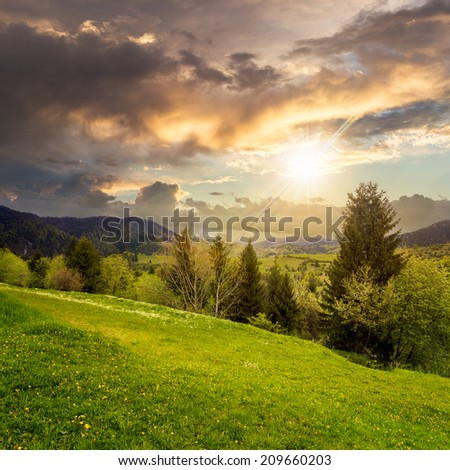 mountain summer landscape with pine trees near meadow and forest on hillside under  sky with clouds at sunset - stock photo