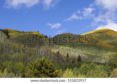 Mountain Top Aspen Grove in Autumn - stock photo