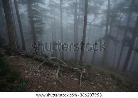 Mountain trail in the misty pine forest near Yalta, Crimea - stock photo