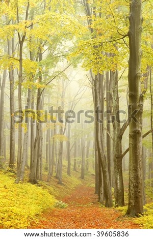 Mountain trail leading through the autumn woods with majestic beech trees surrounded by mist. - stock photo