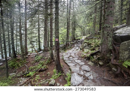 Mountain trail through forest in Tatry, Poland. - stock photo