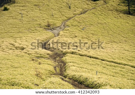 mountain trails branch point in the bamboo field - stock photo