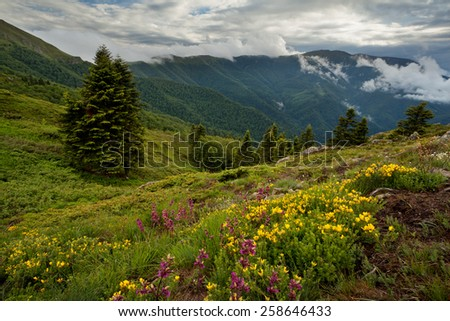 Mountain view with flowers - stock photo