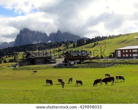 Mountains Alpe di Siusi Alps cow and chalet - stock photo